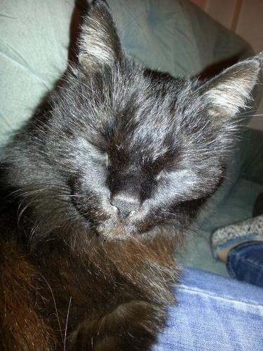 тамара крюкова кот на счастье слушать