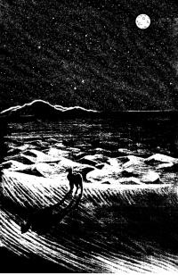 Ангелина - верблюдица в бегах