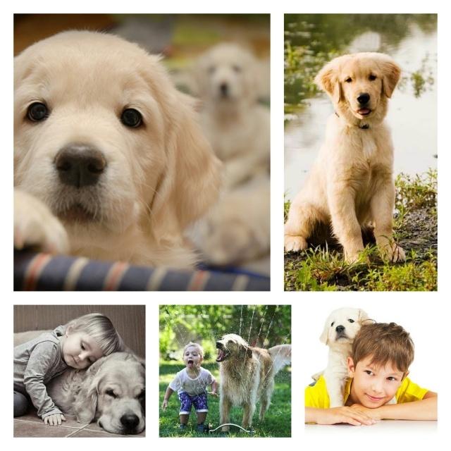 скачать fb2 жизнь и цель собаки бесплатно