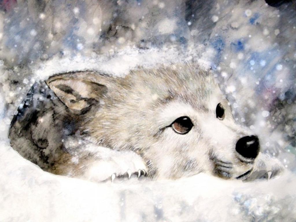 милые картинки с волками причину