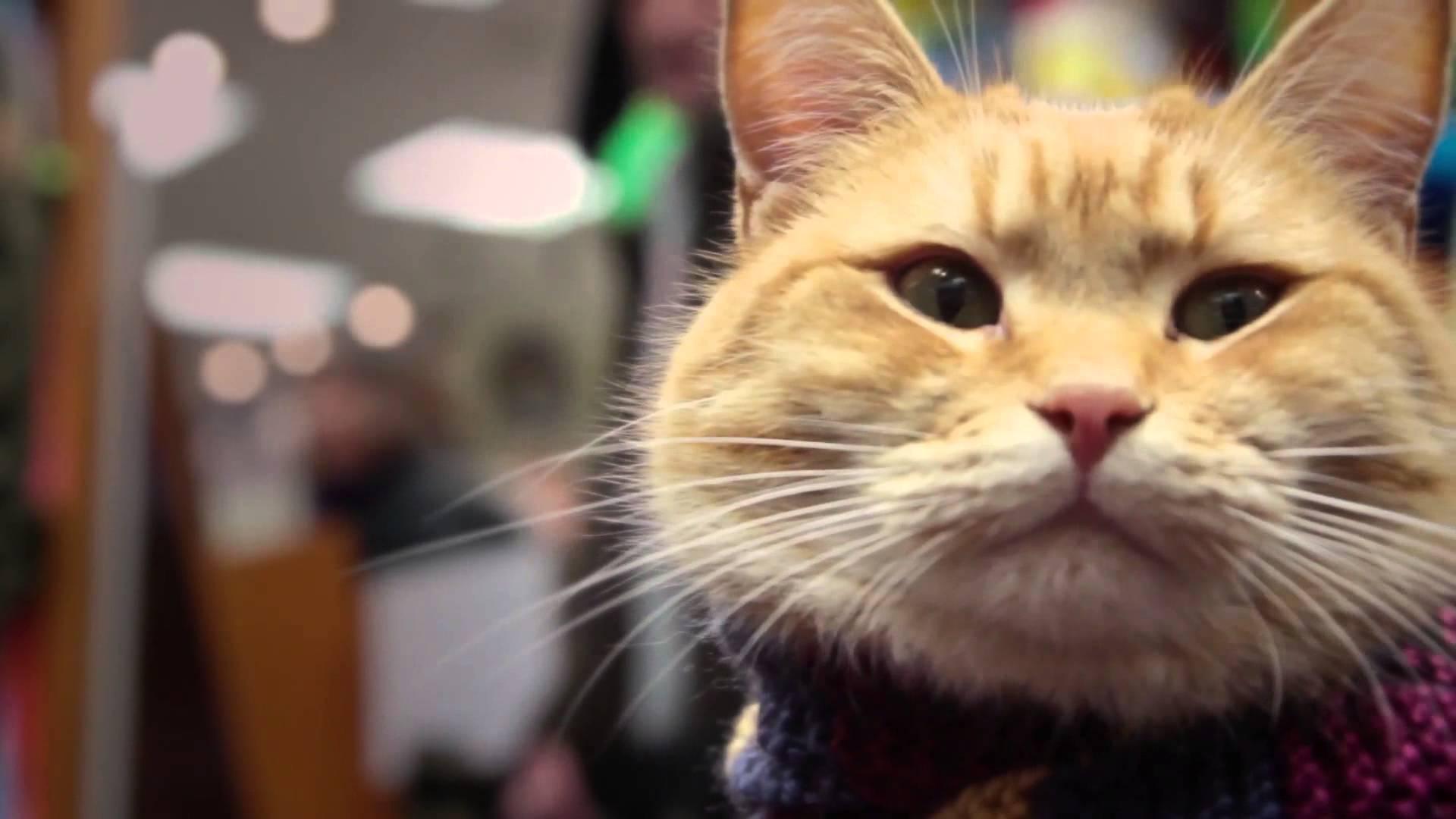 Уличный кот по имени боб аудиокнига онлайн