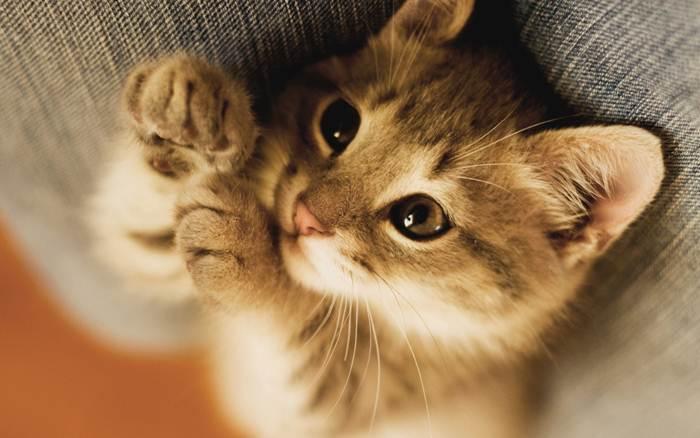 Про котенка Тишу