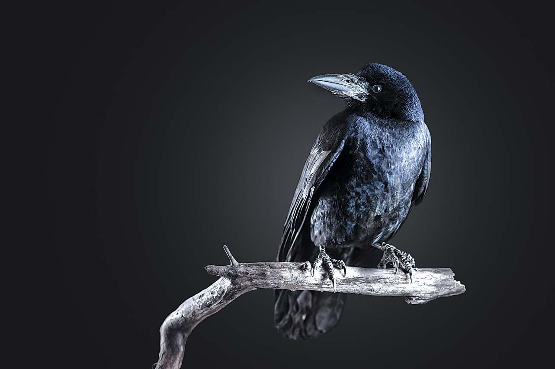 Контрольное изложение 7 класс подбитая птица из книжки рико