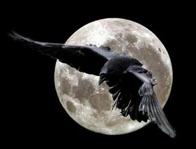 Голос ночной птицы роберт маккаммон скачать