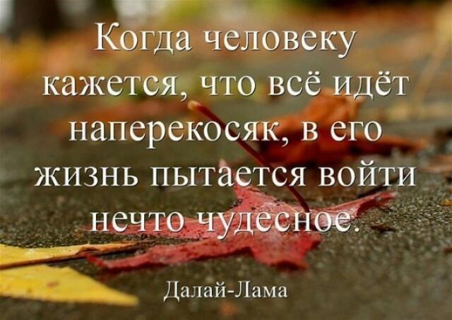 картинка Nekipelova