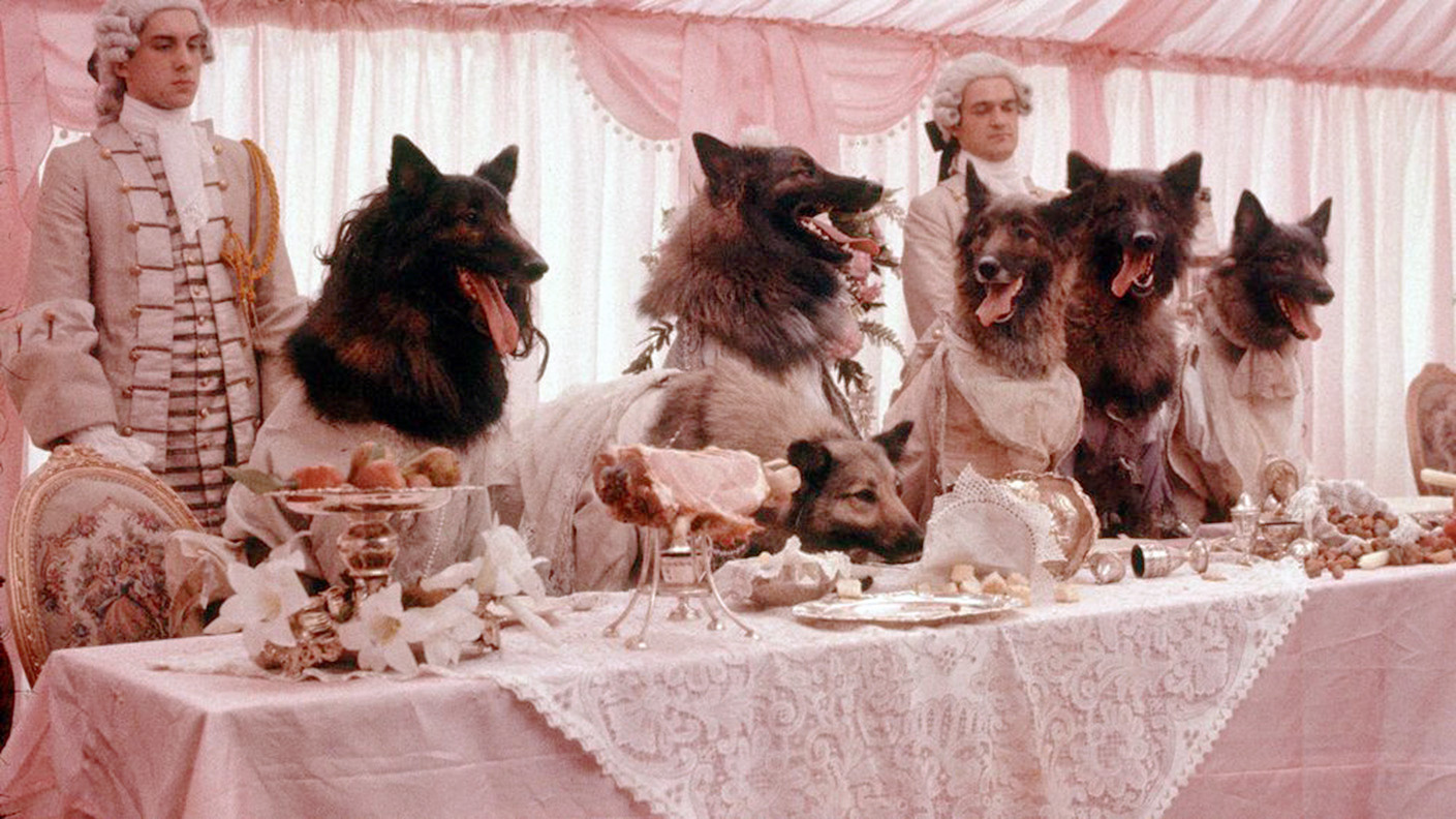 the company of wolves by angela carter essay The joining of two worlds in angela carter's the company of wolves animals and humans are two very different creatures, and yet in this story they share similar qualities.