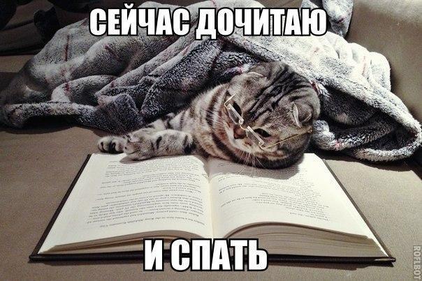 картинка russian_cat