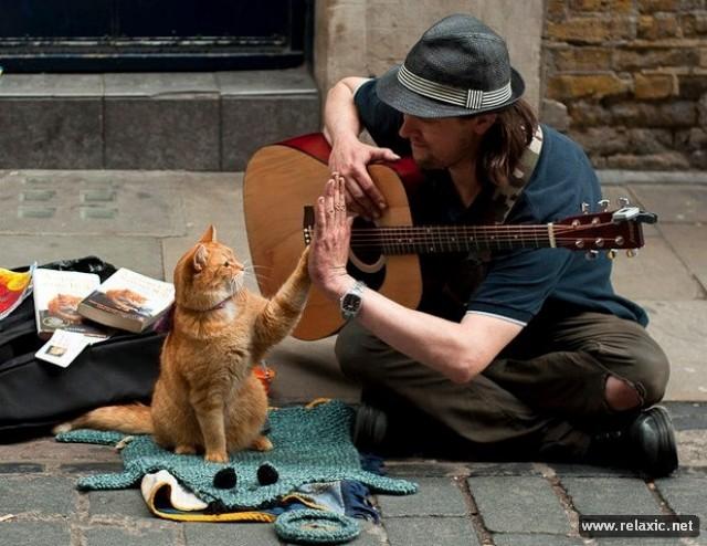 Книгу уличный кот по имени боб стр 4