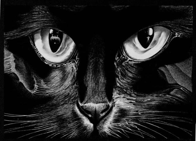fomenko cat