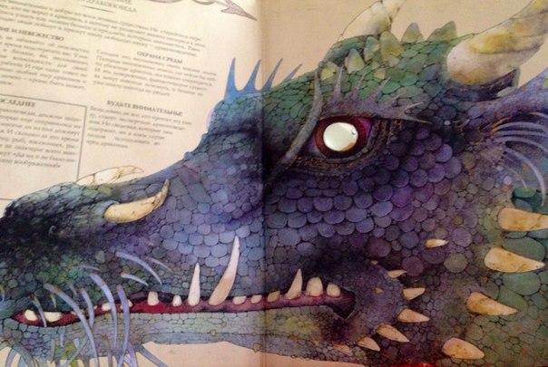 Картинка с драконом из как приручить дракона 1