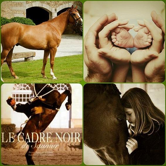 Скачать бесплатно книгу мойес танцующая с лошадьми